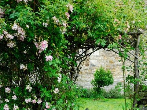 Medieval Vineyard Garden