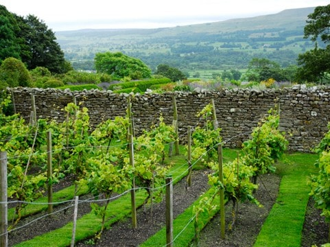 yorkshire-vineyard